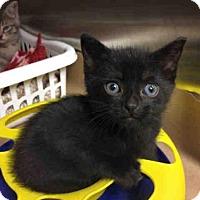 Adopt A Pet :: A776483 - Toronto, ON