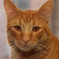 Adopt A Pet :: Barney - St. Catharines, ON