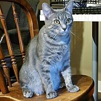 Adopt A Pet :: Stormy - Trenton, NJ