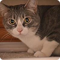 Adopt A Pet :: Sweetie Pie - Laguna Woods, CA