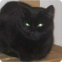 Adopt A Pet :: Cassidy - Orillia, ON