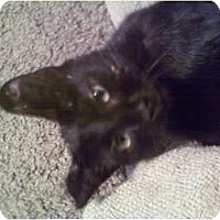 Adopt A Pet :: Baby Rayche - Fort Lauderdale, FL