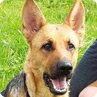 Adopt A Pet :: Samantha - Grants Pass, OR