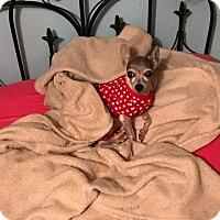 Adopt A Pet :: Fanny - Ardmore, OK
