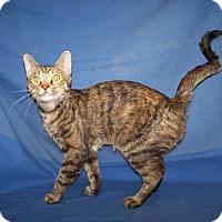 Adopt A Pet :: Princess Kay - Colorado Springs, CO