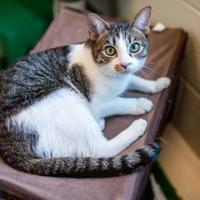 Adopt A Pet :: Raspberry - Memphis, TN