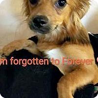 Adopt A Pet :: Brady-ADOPTION PENDING - Boulder, CO