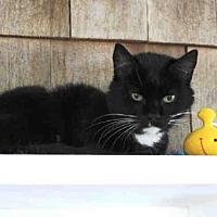 Adopt A Pet :: LOCUST - Hampton Bays, NY
