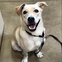 Adopt A Pet :: Bingo - Riverside, CA