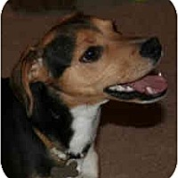 Adopt A Pet :: Wrigley (Courtesy) - Indianapolis, IN