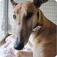 Adopt A Pet :: Gillian (Gillian Ferrari) - Chagrin Falls, OH