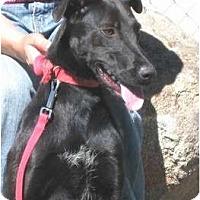 Adopt A Pet :: Josie - Yerington, NV