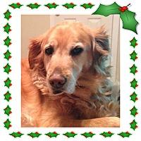 Adopt A Pet :: Winni - New Canaan, CT