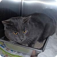 Adopt A Pet :: Ronny - Edmonton, AB