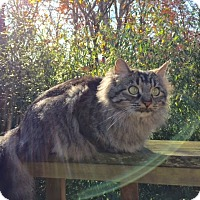 Adopt A Pet :: Tilde - Bentonville, AR