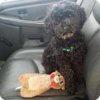 Adopt A Pet :: Sawyer - Meridian, ID