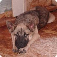 Adopt A Pet :: Brandy - Tucson, AZ