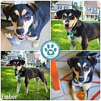Adopt A Pet :: Ember - Kimberton, PA