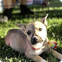 Adopt A Pet :: Sammy - Gilmer, TX