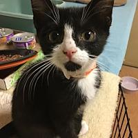 Adopt A Pet :: Trip - Monroe, GA