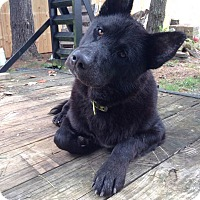 Adopt A Pet :: Trace - Greeneville, TN