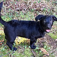 Adopt A Pet :: Frank - Charlotte, NC