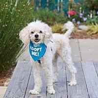 Adopt A Pet :: Corbin - Pacific Grove, CA