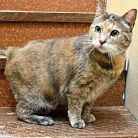 Adopt A Pet :: Vivian - Portland, OR
