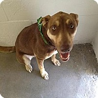Adopt A Pet :: Kate - Winter Haven, FL