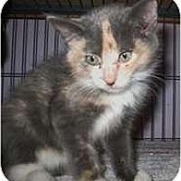 Adopt A Pet :: Gypsy - Shelton, WA