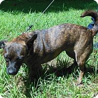 Adopt A Pet :: Dixie - Normandy, TN