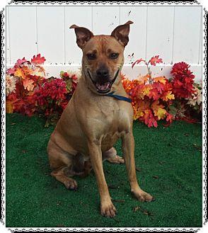 Retriever (Unknown Type) Mix Dog for adoption in Marietta, Georgia - RAMBO - reclaimed