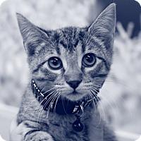 Adopt A Pet :: Farrah - Baytown, TX