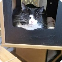 Adopt A Pet :: Rory - Bloomingdale, NJ