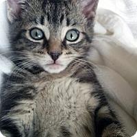 Adopt A Pet :: Macron - Mississauga, Ontario, ON