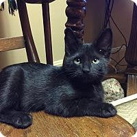 Adopt A Pet :: Jenny - Caro, MI