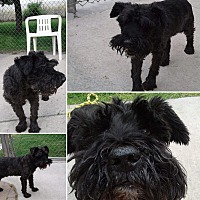 Adopt A Pet :: Max - West Valley, UT