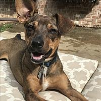 Adopt A Pet :: Sassy Sue~adopted! - Southbury, CT