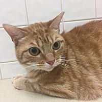Adopt A Pet :: Flint aka Flynn - Cincinnati, OH