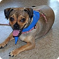 Adopt A Pet :: Ashley - Minneola, FL