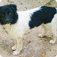 Adopt A Pet :: Ziggy - Nokomis, FL