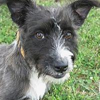 Adopt A Pet :: Otis - Huntsville, AL