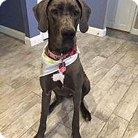 Adopt A Pet :: Lisbon - Marlton, NJ