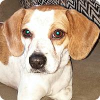 Adopt A Pet :: Able - Orlando, FL