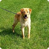 Adopt A Pet :: Coach - Cameron, MO