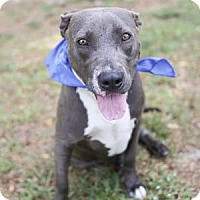 Adopt A Pet :: Jeepers - Lakeland, FL