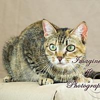 Adopt A Pet :: Tabitha - Crescent, OK