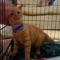 Adopt A Pet :: Squirt - Somerset, KY