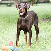 Adopt A Pet :: SEMORA - Greensboro, NC