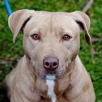 Adopt A Pet :: Renata - Anniston, AL